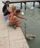 Duas jovens mulheres e menino que alimentam a cisne cinzenta imagens de stock
