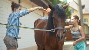 Duas jovens mulheres que limpam um cavalo com água na exploração agrícola animal filme