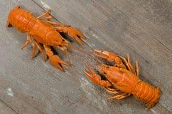 Duas lagostas vermelhas que atracam-se na tabela de madeira velha Imagens de Stock Royalty Free