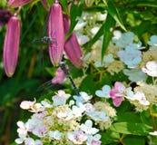 Duas libélulas em Lily Pod Imagens de Stock Royalty Free
