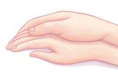 Duas mãos Fotografia de Stock Royalty Free