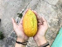 Duas mãos aumentam vegetais amarelos como melões imagens de stock