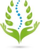 Duas mãos e espinhas, naturopath e logotipo da fisioterapia ilustração stock