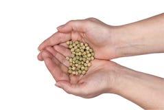 Duas mãos que prendem sementes imagem de stock