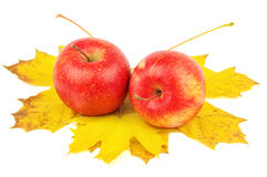 Duas maçãs bonitas nas folhas de bordo do outono Fotografia de Stock Royalty Free