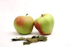 Duas maçãs maduras Imagens de Stock
