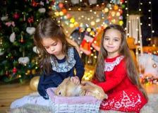 Duas meninas bonitas são jogadas com coelhos pequenos Fotografia de Stock Royalty Free