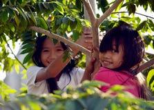 Duas meninas em uma árvore fotografia de stock