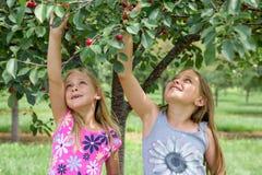 Duas meninas que escolhem cerejas foto de stock royalty free