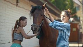 Duas meninas que escovam um cavalo na exploração agrícola animal video estoque