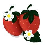 Duas morangos vermelhas maduras Fotos de Stock Royalty Free