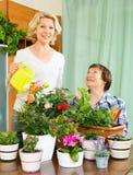 Duas mulheres envelhecidas que tomam de plantas domésticas Foto de Stock