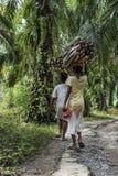 Duas mulheres indonésias levam a madeira em suas cabeças em uma plantação das palmeiras em Sumatra fotografia de stock