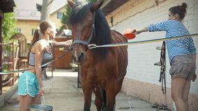 Duas mulheres lavam o cavalo no prado video estoque