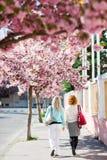 Duas mulheres que andam sob a flor de cerejeira imagem de stock