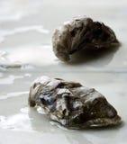 Duas ostras Fotografia de Stock
