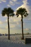 Duas palmeiras Fotografia de Stock