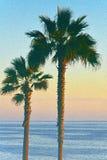 Duas palmeiras Fotos de Stock