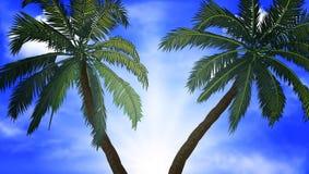 Duas palmeiras em um fundo do céu azul Fotos de Stock Royalty Free