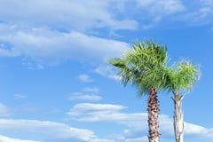 Duas palmeiras em um fundo do céu azul com nuvens brancas fotos de stock royalty free
