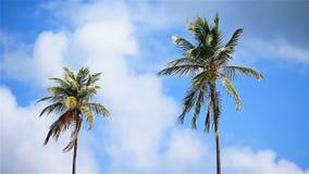 Duas palmeiras grandes no céu ensolarado azul video estoque