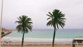 Duas palmeiras verdes no litoral com cerca e estrada no dia ventoso nebuloso vídeos de arquivo