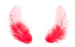 Duas penas vermelhas fotografia de stock