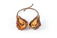 Duas peras secadas Foto de Stock