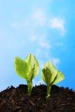 Duas plantas de encontro ao céu fotografia de stock royalty free