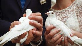Duas pombas brancas casamento Foto de Stock Royalty Free