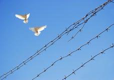 Duas pombas no céu fotografia de stock
