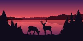 Duas renas pela paisagem vermelha bonita do lago ilustração stock