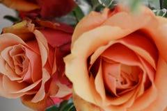 Duas rosas alaranjadas Fotografia de Stock Royalty Free