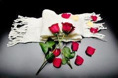 Duas rosas vermelhas junto com as pétalas vermelhas em um fundo preto Imagens de Stock Royalty Free
