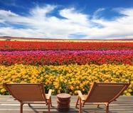 Duas salas de estar do chaise no campo de flor Imagens de Stock Royalty Free