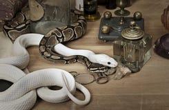 Duas serpentes com objetos do vintage imagem de stock royalty free