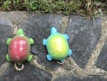 Duas tartarugas imagem de stock