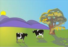 Duas vacas Fotografia de Stock