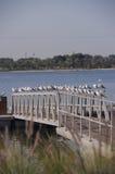Dubaï 11 Image stock