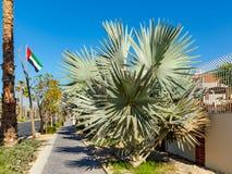 Dubaï, Emirats Arabes Unis - 12 décembre 2018 : amélioration des rues et des espaces publics de ville image libre de droits