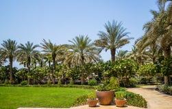 dubai Été 2016 Une oasis verte donnant sur l'hôtel Jumeirah de quatre saisons Photo libre de droits
