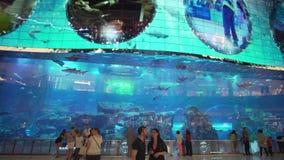 Dubai akvarium och under vattenzoo i den inre Dubai gallerian för shoppinggalleria` s Folk som tycker om materielet för härlig si arkivfilmer