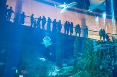 Dubai-Aquarium Stockbild