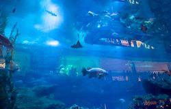 Dubai-Aquarium Stockbilder