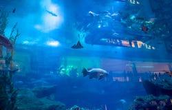 Dubai-Aquarium Lizenzfreie Stockfotografie