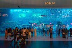 Dubai-Aquarium, colocated mit dem Dubai-Mall Stockbilder