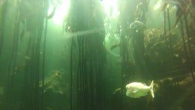 Dubai aquarium ecosystem stock video footage