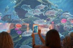 Dubai aquarium Royalty Free Stock Image