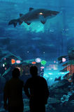 Dubai-Aquarium u. Unterwasserzoo Stockbild