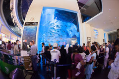 Dubai Aquarium and Under Water Zoo Stock Image